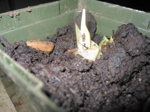 frosen plants 004